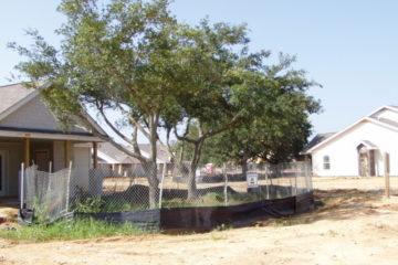 Construction Site Tree Preservation Management